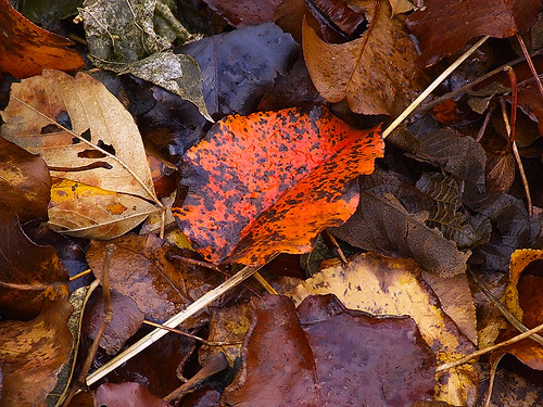 Fallen leaves 1.jpg