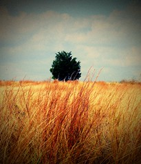 Lone Tree~Manor, Texas (   giamarie  ) Tags: ranch tree green clouds gold lomo solitude texas lonetree prairiegrasses dumpr manortexas top20texas