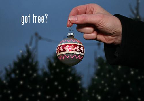 got tree?