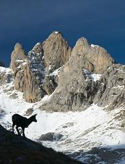 El Diente de Urriellu (jtsoft) Tags: mountains landscape asturias olympus picosdeeuropa e510 cabrales zd1454mm rebecos jtsoftorg