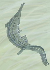 Prionosuchus the Temnospondyli Amphibian