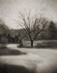 diverge (Jeff Rinehart  (almost back in action)) Tags: road blackandwhite tree texture monochrome sepia lensbaby vintage path textures faux layer layers paths toned lensbabies tinted blueribbonwinner jeffrinehart