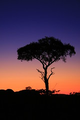 Tree in silhouette (endraum) Tags: africa sky tree canon colours namibia goldmedal silvermedal flickrsbest specnature eos400d platinumphoto alemdagqualityonlyclub fotocompetition fotocompetitionbronze fotocompetitionsilver fotocompetitiongold