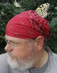 Like my hat?  Butterfly not included. (Jim Frazier) Tags: red portrait people selfportrait chicago me nature hat animal animals museum fauna butterfly bug insect beard relax fun photography illinois clothing hilarious funny flickr humorous break photographer head joke humor january relaxing cook ofme il cap portraiture rest resting bandana relaxed 2008 q3 cookcounty zany breaktime idealeuconoe naturemuseum flickrite flickrer notebaert paperkite 365days stlouisarea notebaertnaturemuseum judyistockbutterflyhaven flickrster imonmybreak 200801butterflies tobutterflygroup