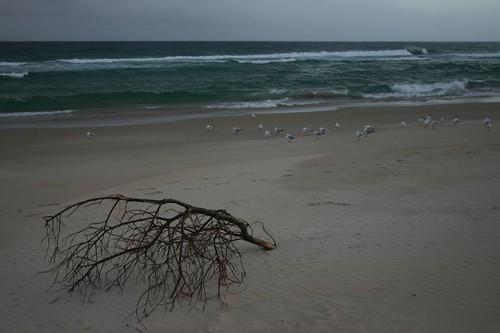 Lagoons Beach on the Tassie East coast...