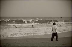 Flushing Seagulls (Light Your World Photography) Tags: ocean seagulls beach water beauty sepia sigma1770mm pentaxk10d