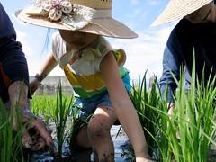 愛吃飯 農夫直購稻田裡挲草-小二寶