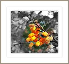 Orange focal black & white (sassy40's is exploring) Tags: orange white black picnik enjoylife focal teampilipinas lahoss08 larawangpinoy