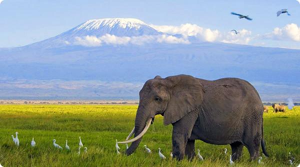 5726046321 8e64b77b0b z El Kilimanjaro ha entrado en erupción