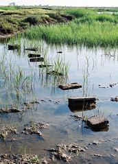 Steps (dkilim) Tags: river fuji minolta superia delta greece macedonia 200 thessaloniki xd5  kalochori      gallikos