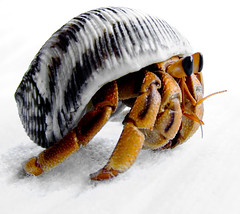 Land hermit crab macro (Vanessa Pike-Russell) Tags: macro hermitcrabs hermitcrab bestof australia finepix nsw mostinteresting newsouthwales fujifilm portfolio popular 2007 wollongong myfaves landhermitcrab s5600 vanessapikerussellbest
