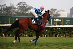Aquecimento (raizdedois) Tags: cavalo jockeyclub jquei preo