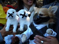 slience of the lambs (istolethetv) Tags: nyc newyorkcity dog eastvillage photo foto image awesome snapshot picture photograph gothamist  dogrun hanniballecter howloween silenceofthelambs  tompkinssquarepark dogcostume halloweendogparade dogwearingclothes halloweendogcostume tompkinssquareparkhalloweendogparade 17thannualtompkinssquarehalloweendogparade halloweencostumesfordogs