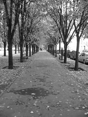 Parisian Sidewalk