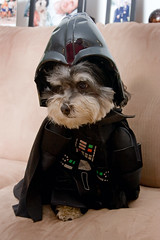 PAD 2007 - 304: The Ultimate Humiliation (the other Martin Taylor) Tags: dog halloween costume darthvader babalu havanese project365