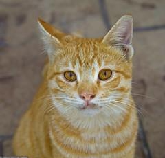 Applebee's Cat (Mishari Al-R