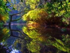 Peace Offering (RoystonVasey) Tags: uk england reflection photoshop wow river newcastle fuji britain united great kingdom tyne explore finepix gb upon orton jesmond dene s6500fd s6000fd