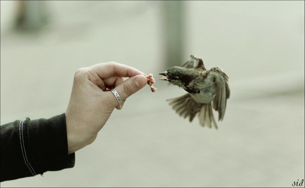 птицо