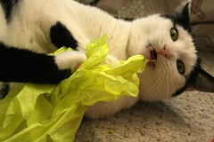 So I love tissue paper. So what?
