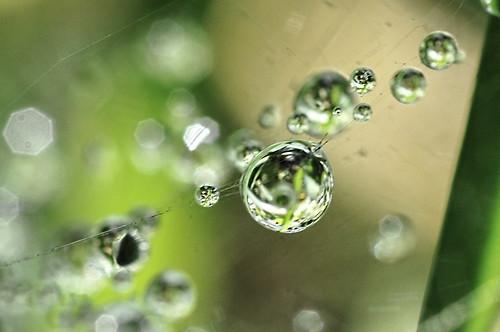 drop ALR_0015b