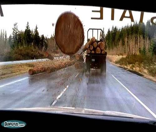 flying log.jpg