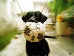 Haruu! (alineioavasso) Tags: dog co ball zoom cachorro bola zooming haruu