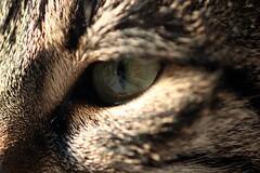 Anu (CatsFrauPau) Tags: eye female cat canon eos 350d katze makro 2008 canoneos350d anu eos350d canoneos auge canoneosdigitalrebelxt catseye februar cateye eosdigital katzenauge eosrebelxt februar2008