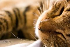 (Sherwin_andante) Tags: cat 2008 toro 貓 sigma1770 k10d bestofcats 龍二 200803