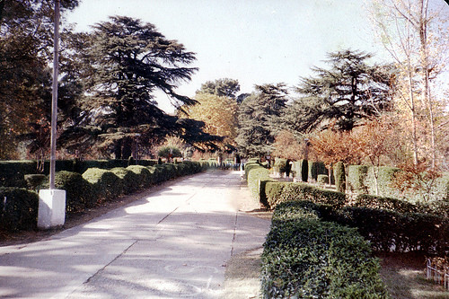 19th century ,..Lady Gordon's Garden..??, Abbottabad, where massive Cedars of Lebanon are visible on both sides,..these trees and fragrant camphor trees were brought from England in pots...Photo taken