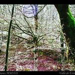 Pamplona,Valle de Erro-Bosque 2 thumbnail