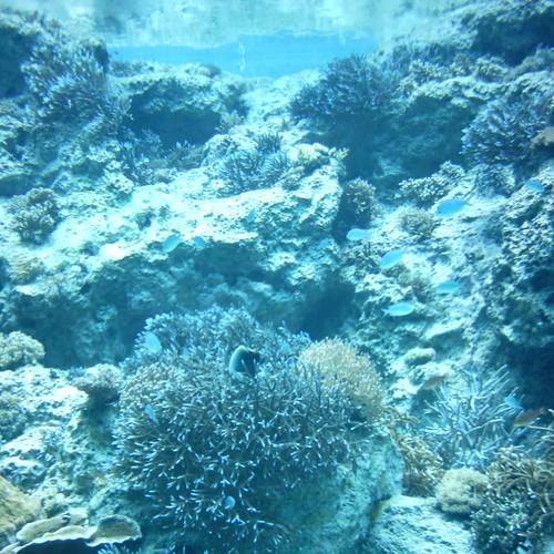 【写真】Under the water [ Kunigami District / Okinawa ]