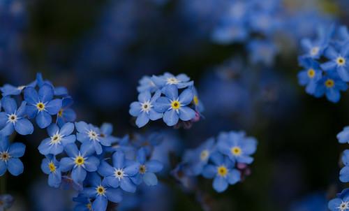 9057 : Blue Stars