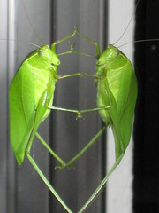 Bug & Reflection 2