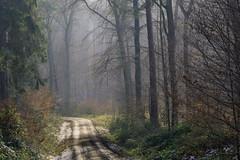 Eifel (Netsrak (on/off)) Tags: atmosphäre bäume farbe farben forst landschaft licht natur schatten stimmung wald atmosphere color colour forest landscape light mood nature shadow tree trees woods rheinbach nordrheinwestfalen deutschland de