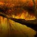My Wild Arts Bridge/Mon Pont des Arts!!! :))) - by Denis Collette...!!!