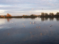RH 183 (Watersport Academy De Kaag) Tags: herfst reunie groot