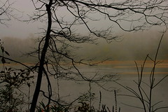 ~Misty~ (~M~Chelle & her view***) Tags: autumn usa lake tree fall nature beauty fog view natural mo missouri ozarks naturesfinest smorgasboard abigfave taneycounty platinumphoto superbmasterpiece diamondclassphotographer bransonarea ~m~chelle trilakesarea