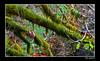 Out on a limb (Bonell Photography (dasbull)) Tags: light usa color colour green art texture love tourism nature beautiful beauty contrast photoshop work dark real fun lumix us photo washington moss amazing cool fantastic artwork flickr niceshot shot angle natural northwest image awesome feel great joy perspective picture atmosphere location best sharp panasonic spanish aberdeen swamp frame passion pacificnorthwest pro northamerica wa washingtonstate pnw hardwork tone borders authentic exciting generic 2007 graysharbor fz50 amature joyfull twinharbors hoquiam dmcfz50 panasonicdmcfz50 dasbull ronbonell