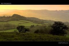 No Worries (Sean Bolton (no longer active)) Tags: sunset tree wales landscape carmarthenshire sheep cymru wfc naturesfinest seanbolton worldbest welshflickrcymru ffotocymrucouk