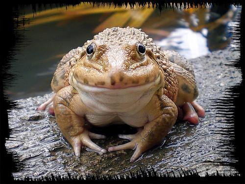 froggy frog