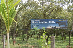 Black Stallion Banner. (Blackstallionhills.com) Tags: ranch horses costa black real for marketing estate sale creative hills vida trust land pura adds lots stallion presale blackstallionhillscom