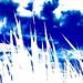Blue Sky (踩下去)