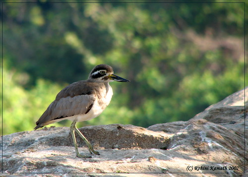 R-Thick Knee
