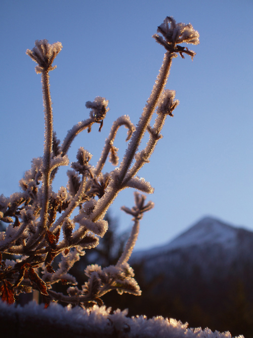 morning frost with Deer Mountain, Ketchikan, Alaska