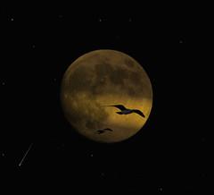 Lunar meteorites (Bn) Tags: moon nature topf25 stars solar topf50 topf75 gulls luna topf300 fullmoon topf100 500faves soe topf200 fullmoonparty shootingstar topf400 fallingstar sobeautiful topf500 blueribbonwinner shootthemoon topf600 splendiferous supershot 100faves 50faves meteoroid 200faves outstandingshots 35faves meteoor 25faves golddragon abigfave 300faves platinumphoto anawesomeshot 400faves superbmasterpiece 600faves favemegroup3 wowiekazowie favemegroup7 diamondclassphotographer megashot ishflickr citrit excellentphotographerawards theunforgettablepictures lichtstreep ionizationtrail justhitmewithyourbestshotselectedfordec2007photocontest 22december2007 sacredmoon