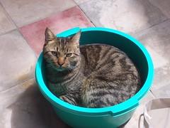 100_3434 (cisolar) Tags: mi gato benito