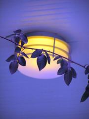 porch light (KarenMarleneLarsen) Tags: dusk urbannature somervillema neighborhoodwalk 1408 urbannatureblog