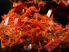 Crocoite (Tjflex2) Tags: red color nature beauty rock museum compound nice pretty gallery natural display personal crystal australia structure collection minerals mineral tasmania colourful dundas information lead interest naturalwonders element specimen collector reference chemical inorganic crystalline geological chromium crocoite mineralogy chromate locality rockhound top20colorpix mineralogical sulphate crystallinestructure monoclinic naturallyoccurring adelaidemine geometricspatialarrangement