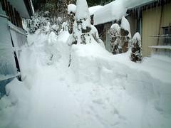 雪ぬけの後