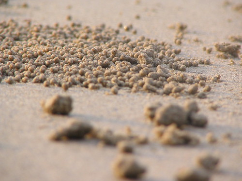 crabs eye view of the sand balls.jpg